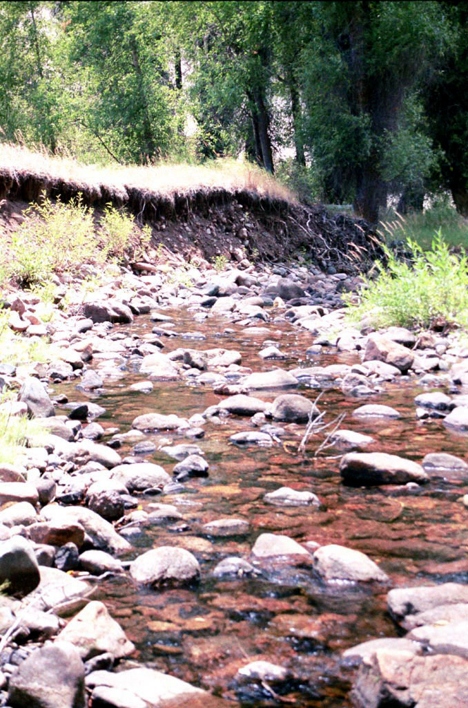 Roaring Fork of Little Snake River prior to restoration showing entrenched F4 stream type with eroding banks