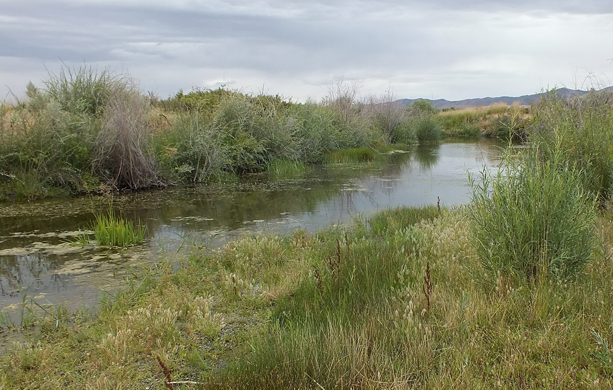 Maggie Creek in 2014, 23 years following restoration, showing wetlands and excellent riparian rebound (photo courtesy of Barry Southerland)